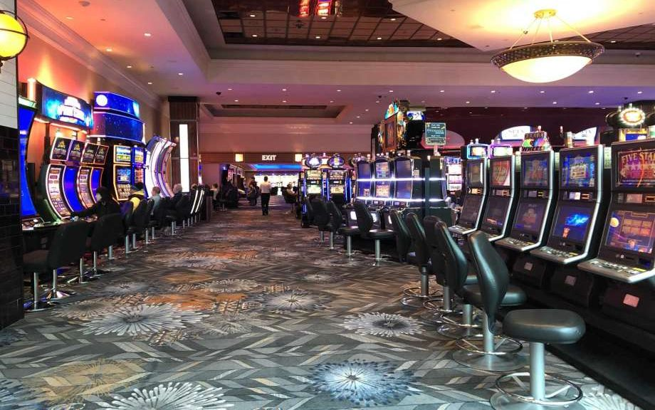 Cats, Canines, and Online Casino